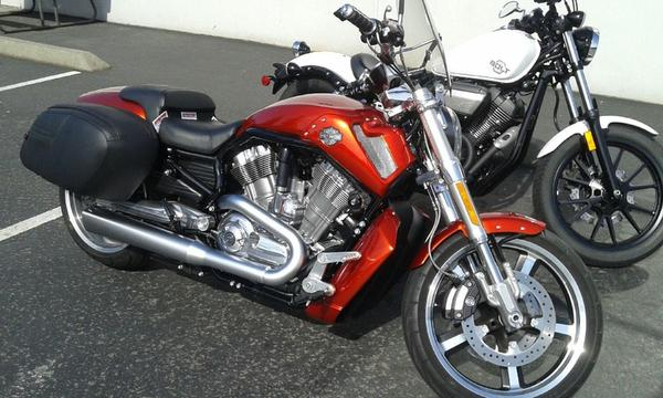 My new Harley VRod Muscle