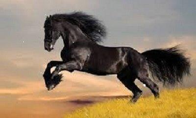 Photo of a galloping horse