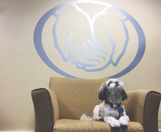Trent Malone - Our Office Mascot