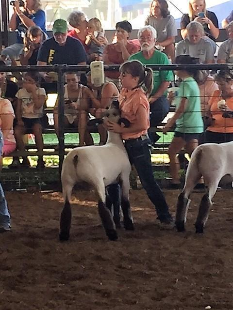 A girl clutches a wee lamb at a rodeo