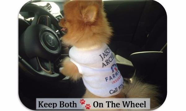 A tiny dog wearing a Farmers shirt is behind the steering wheel of a car