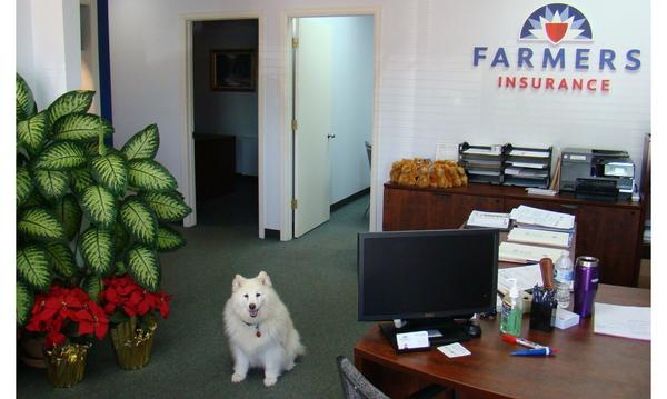 White American Eskimo dog greeting clients