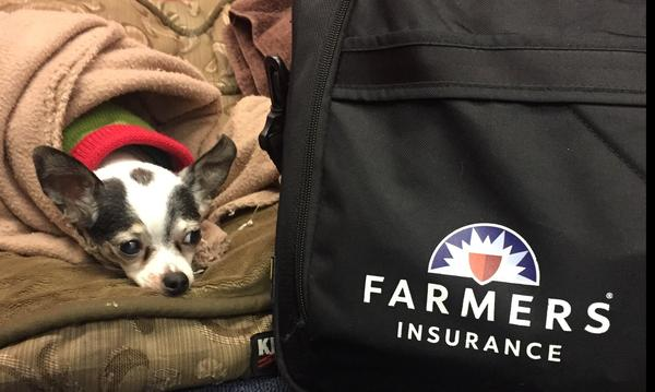 Farmers® Pet's Best Ambassador Mogley