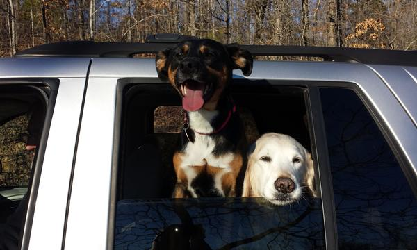 Gracie and Bailey sure loved to go for car rides on the weekends.