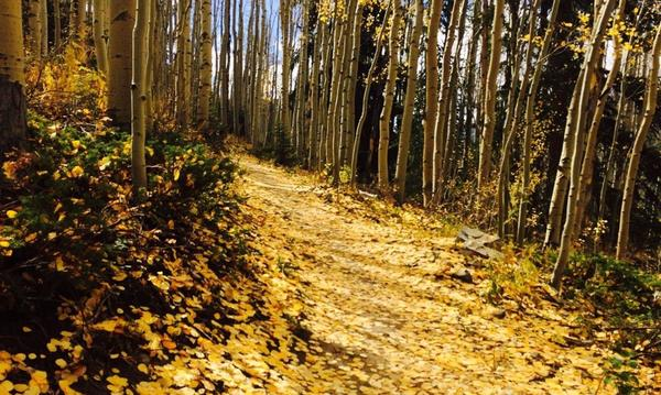 The Summit County version of the yellow brick road in autumn.