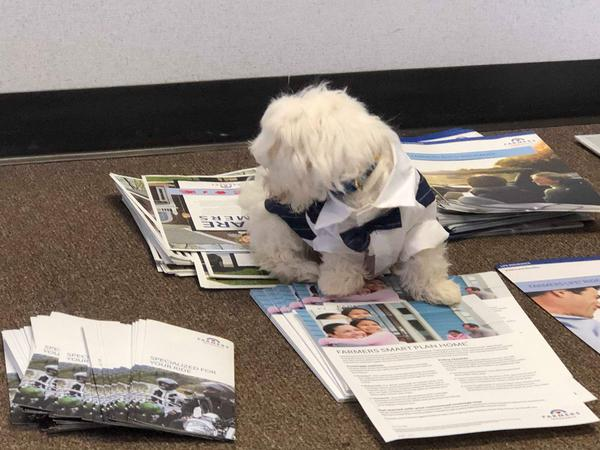 small white dog on papers