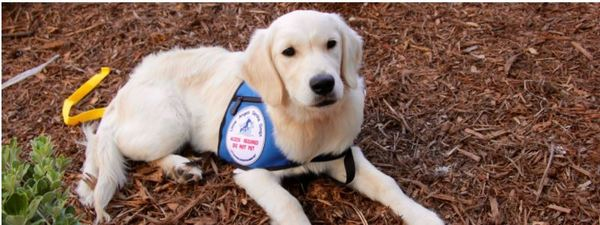 Farley is now a mobile assistance service dog