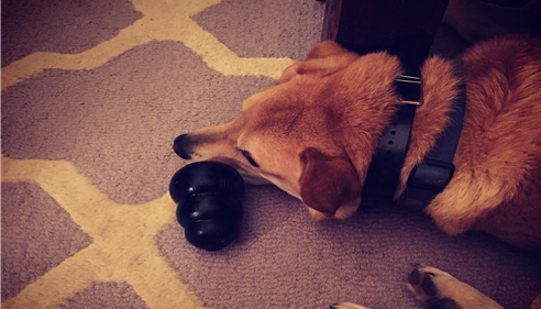 Watson is protecting his Kong