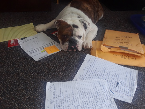 Bulldog laying on the ground with a pile of paperwork.