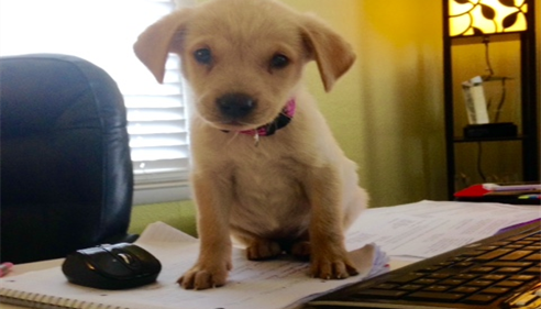 Introducing Buttercup, our office mascot!