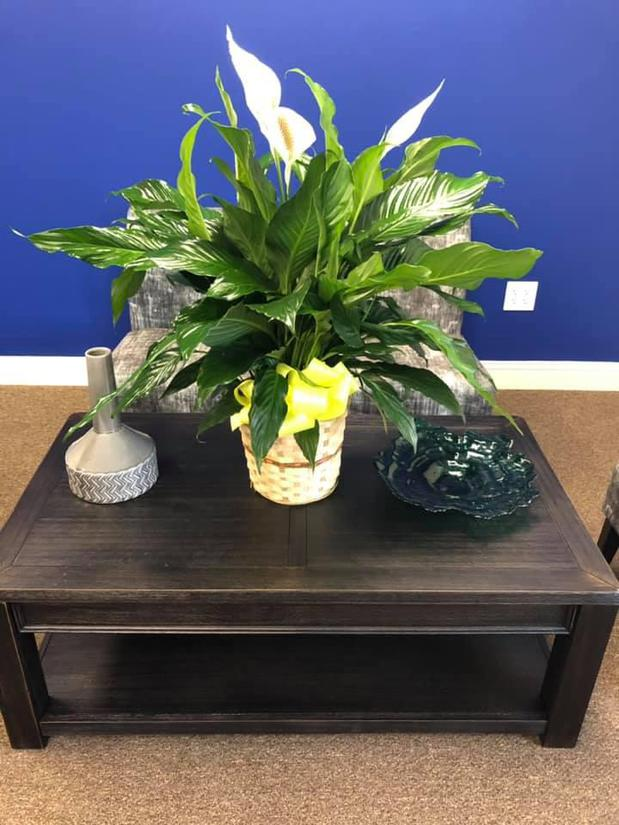 indoor plants on a side table