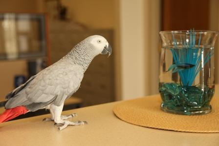 A bird stands perched on a table