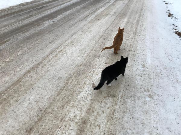 Two Cats on a Walk