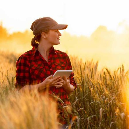 A woman stands in her wheat field and uses a tablet to check her accounts