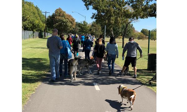 A large crowd of dog owners walk their dogs around the park!