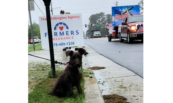 Dog poses with Farmers sign during parade