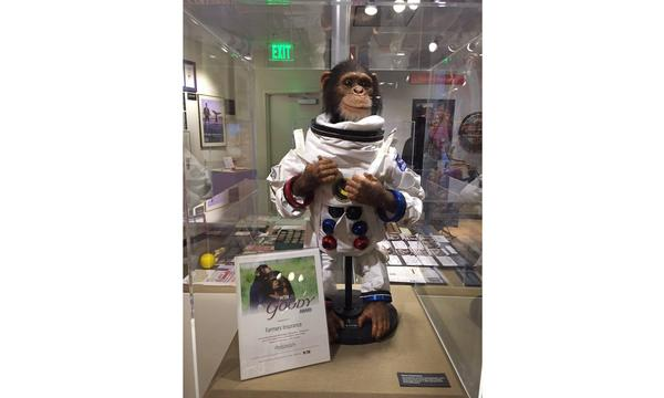 A stuffed monkey in a museum display