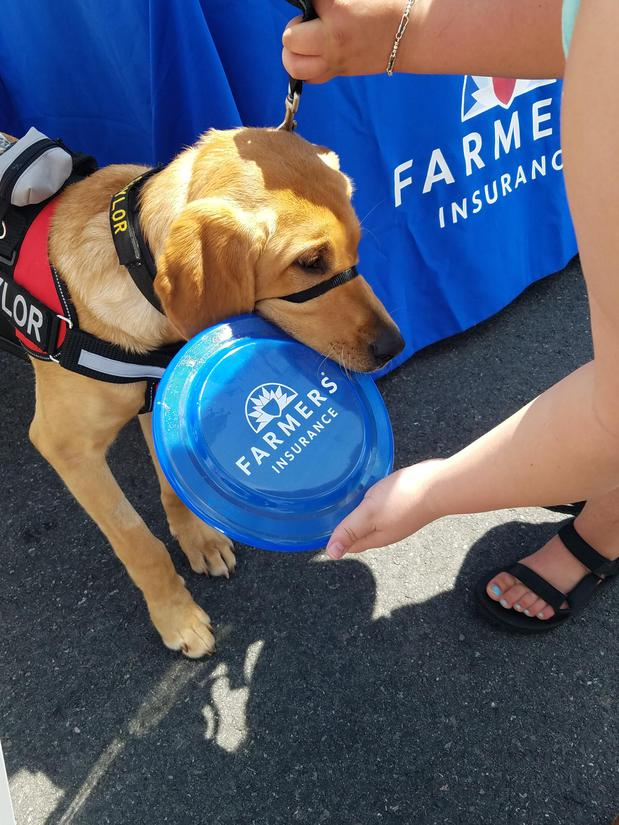 Service dog with frisbee
