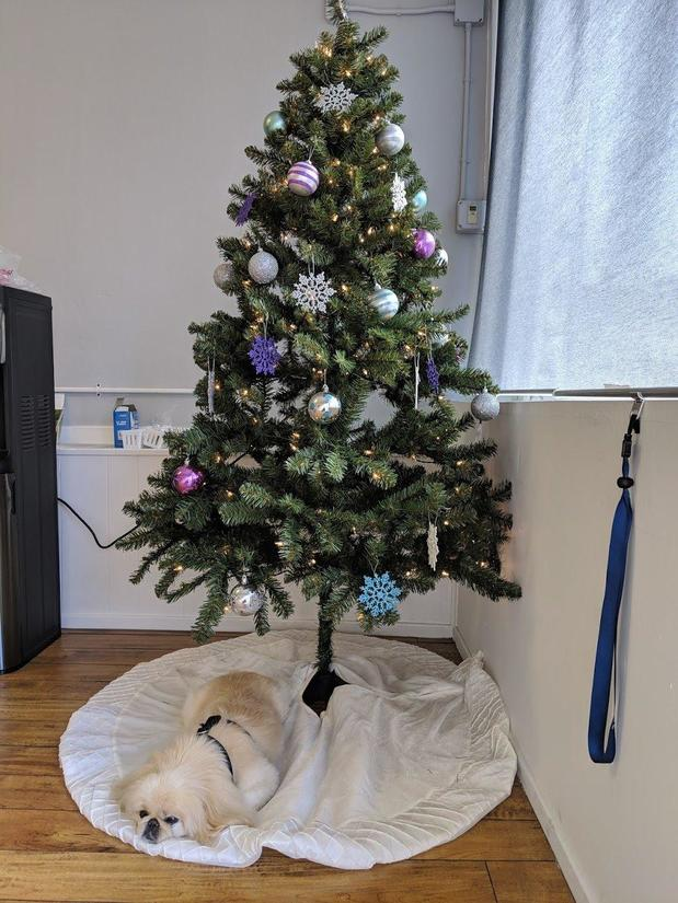 Photo of dog under Christmas tree