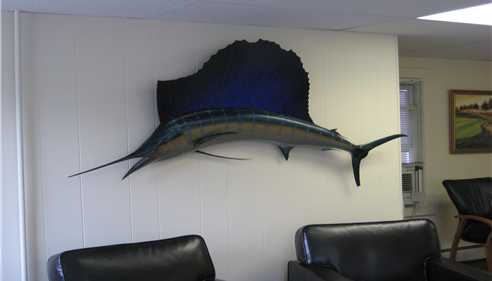 Fish hanging on a wall