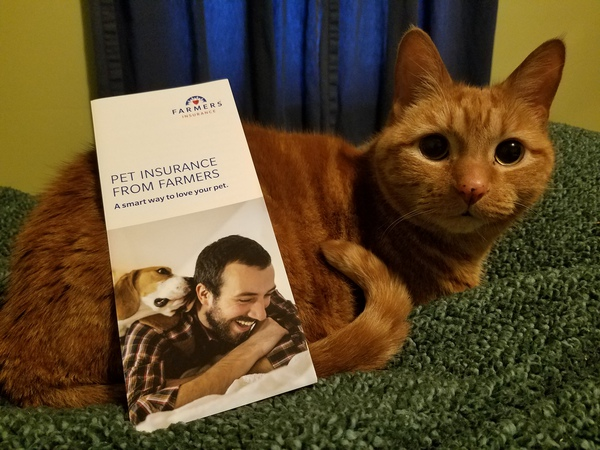 Cat with brochure