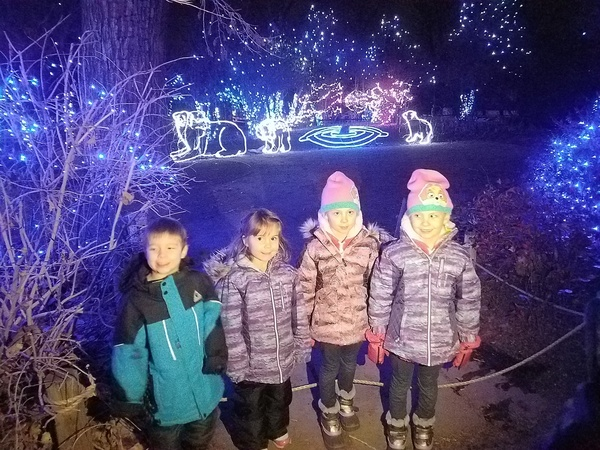 Denver Zoo Lights!