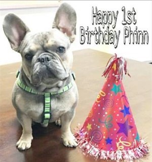 Danielle Shannon Agency - Happy 1st Birthday, Phinn!