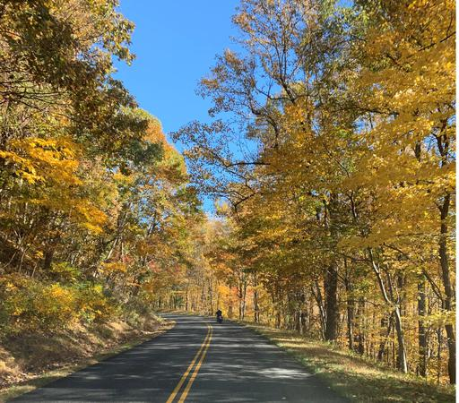 Image of a road and trees with yellow and red leaves