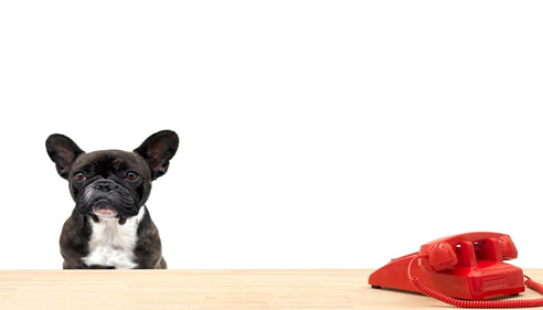 Small black dog next to a red telephone