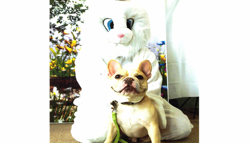Took and the Easter Bunny