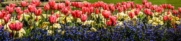 May-Flowers-Header-Image