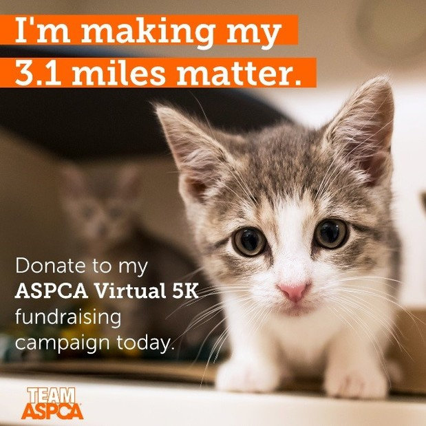 Tracy McKenica Besenyodi - Support the ASPCA®
