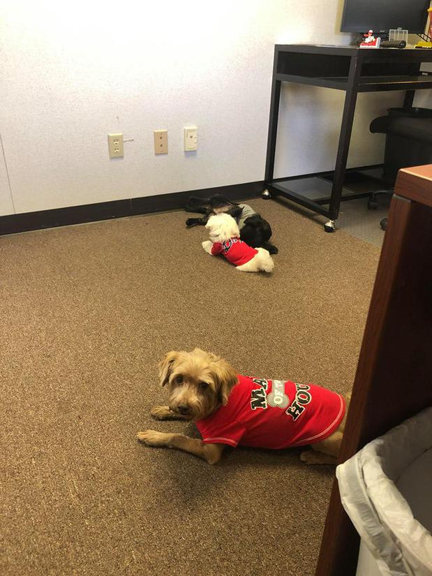 small dog in red jersey