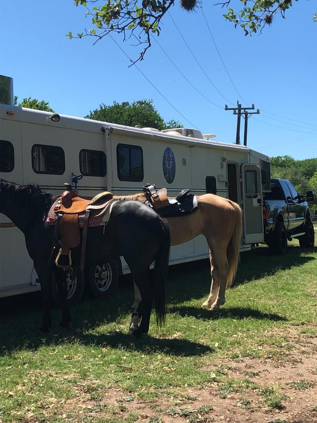 two saddled horses by trailer
