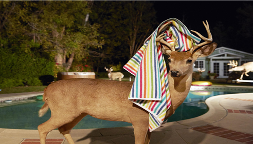 Have you ever had a pool party with unexpected guests?