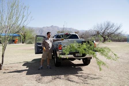A man poses with a bundle of branches in the bed of his pickup truck.